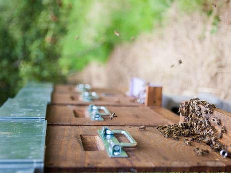 Mes abeilles - Apiculteur