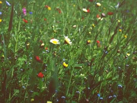 Les Rendez-vous aux jardins - Amfreville-sous-les-Monts