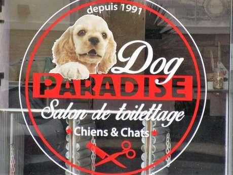 Dog Paradise