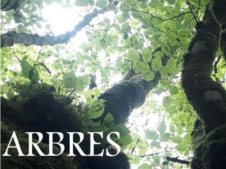 Exposition | L'arbre & la Forêt