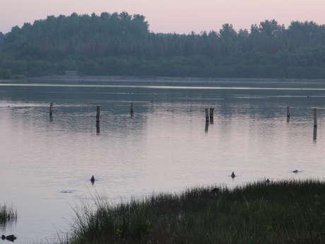 Animation nature et patrimoine - Le Domaine de Careil, havre de paix lors de la migration des oiseaux
