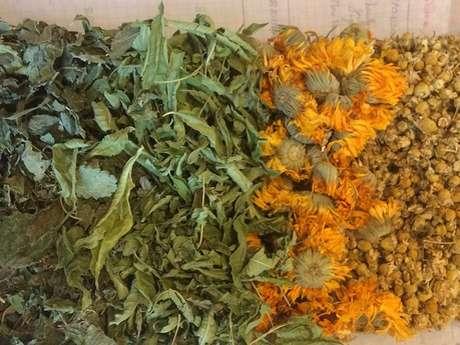Sortie Plantes médicinales
