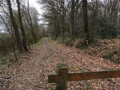 Forêt d'Araize n°17