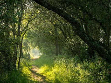 La forêt d'Iffendic