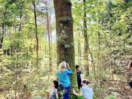 Séance de Bain de forêt à la 1/2 journée