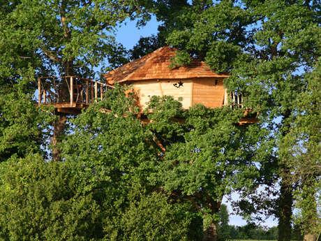 Cabanes dans les arbres de l'Alleu