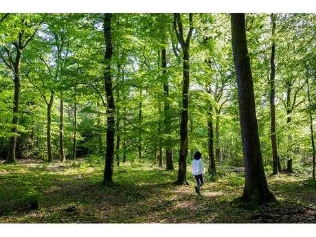 Rendez-vous Rives Nature: Balades Nature
