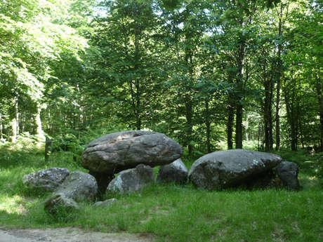 La Forêt domaniale de Fougères