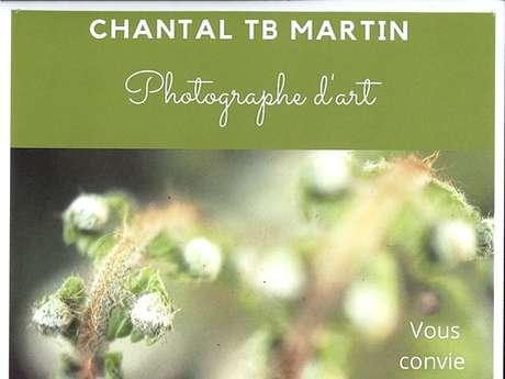 """Expo photos """"La Planète Fougère"""" de Chantal TB Martin (fermé)"""