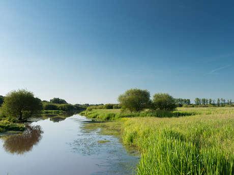 Les Marais de Timouy et de Gannedel