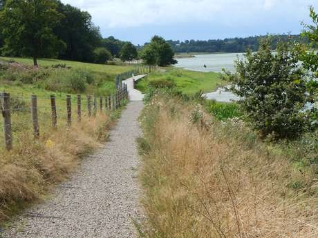 Tour du plan d'eau de Haute-Vilaine n°72
