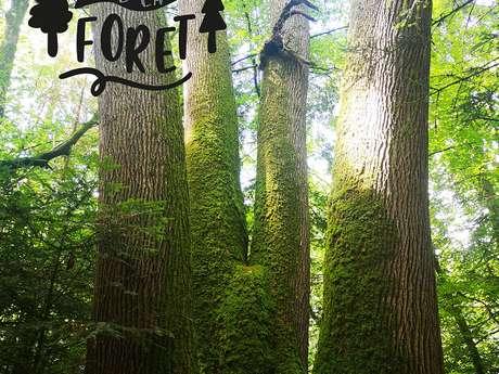 Sortie nature : En Forêt, il n'y a pas que des arbres