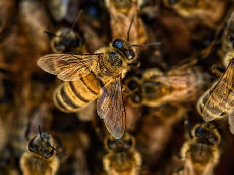 Visite des ruches de Monsieur Coatleven