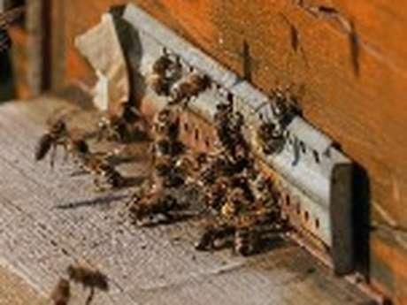 9 août animations autour des abeilles et du miel à l'Ecomusée