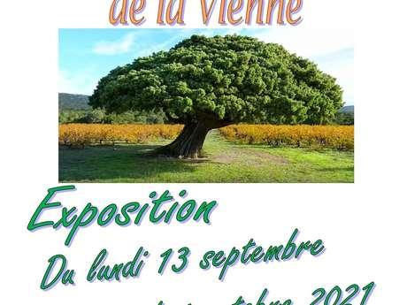 """Exposition """"Les arbres remarquables de la Vienne"""""""