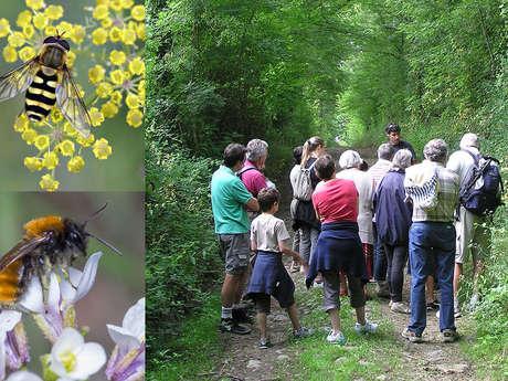 Balade nature à Montmorillon