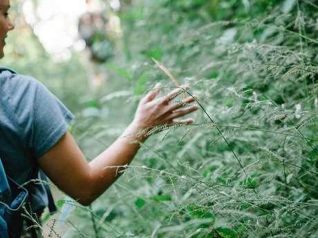 Promenade à la découverte des plantes.