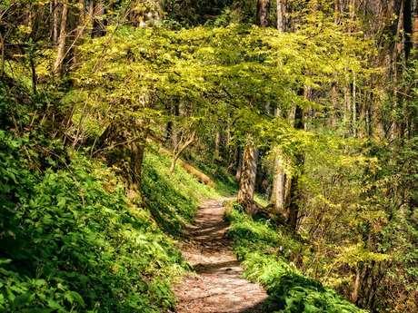 Parcours athle nature : Domaine de Miglos