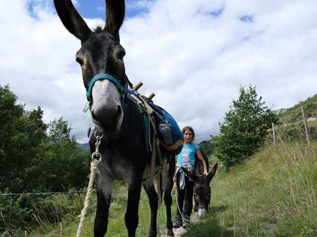 Ride with a donkey