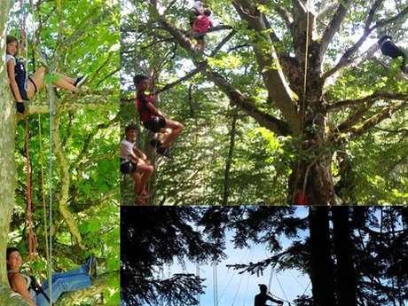 A la découverte des cîmes- Grimpe d'arbre