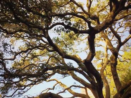 Escalade d'arbres avec Haut Perché