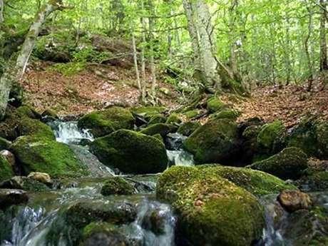 "Balade Découverte ""Chemin de Runac"""