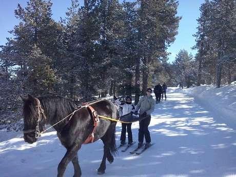 Ski Joering en solo ou en duo avec Angaka Village Nordique
