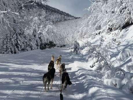 Promenades en chiens de traineaux-Husky Evasion