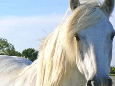 """Ferme Equestre """"Les Galops du Boisset"""""""