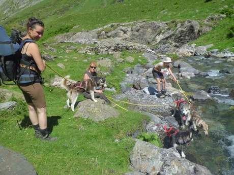 Cani rando et cani trott' avec Les traîneaux de la vallée des ours