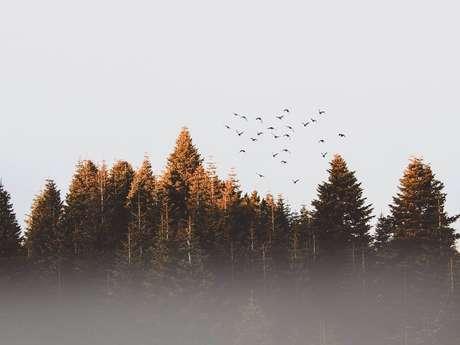 Balade et peinture de paysages