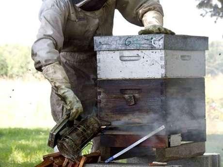 Bee au Top - Le rucher de Fontabeilles