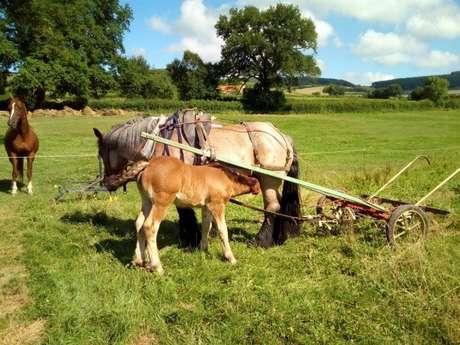 Dimanche hors les murs : « Découverte de l'agriculture à l'ancienne »