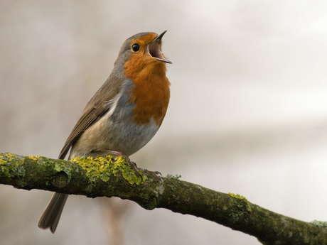 Initiation Écoute des Chants d'Oiseaux - COMPLET