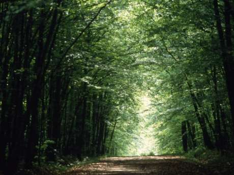 Du Pays d'Othe à la forêt de Chaource