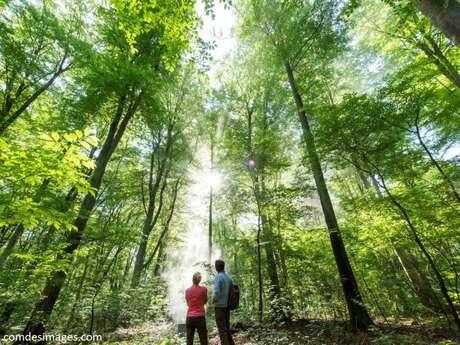 Bain de forêt d'Octobre avec Christian Decamme