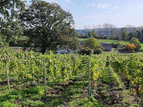 Le Vignoble d'Occarius