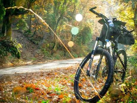 Les vélos du RAVeL 126