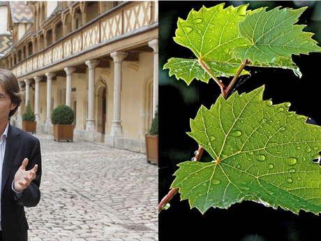 A Beaune & en Bourgogne - Visites guidées