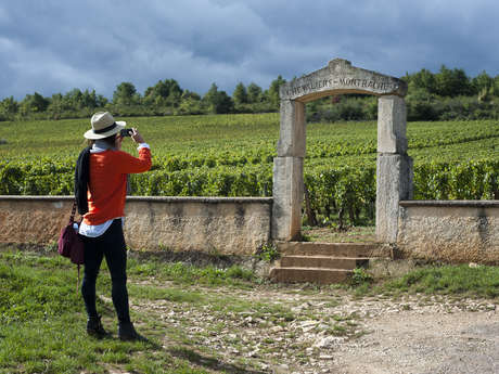 Vineatours
