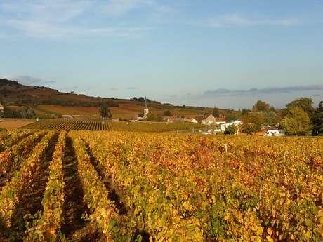 Bourgogne Moniot