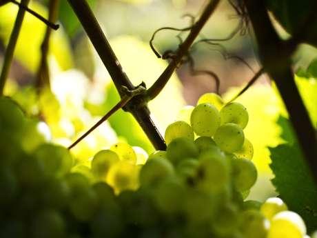 Bourgogne Gold Tour - Beaune