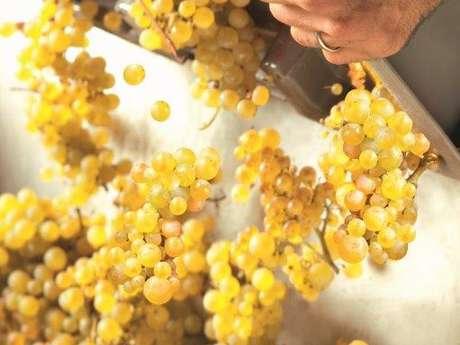 1/2 journée commentée dans le vignoble avec dégustation