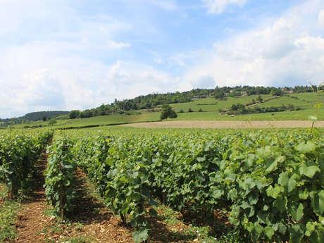 Bienvenue en Bourgogne : Escapades en Bourgogne