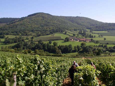 Bourgogne Randonnée : Le Prestige de la Voie des Vignes - de Dijon à Beaune