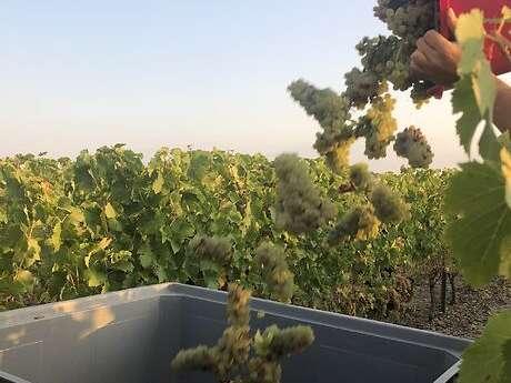 Maison Des Vins Anjou Saumur