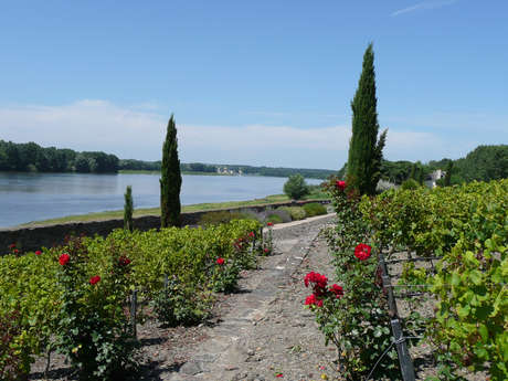 Sainte-Gemmes-sur-Loire - from flower to river