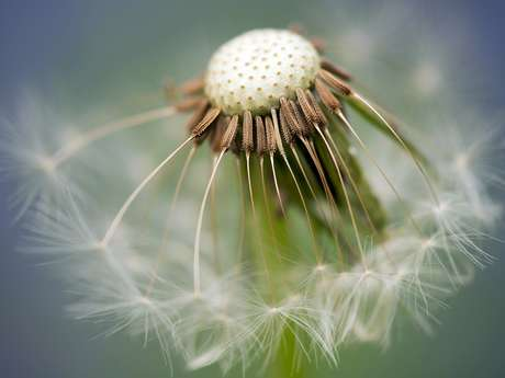 [ANIMATION CONFIRMEE] - Visite – La flore miraculeuse