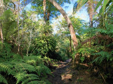 Forêts de Bébour-Bélouve