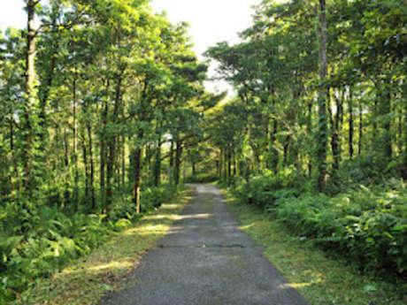 Forêt de Mare-Longue